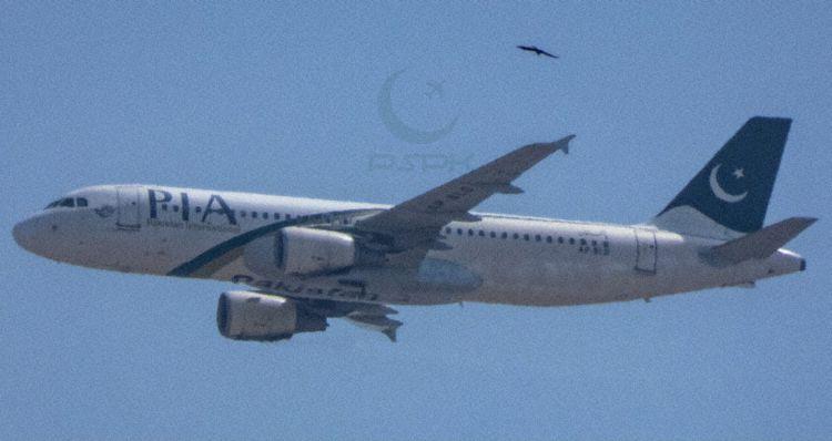 Noticias de aerolíneas. Noticias de compañías aéreas. Avión siniestrado de PIA